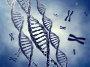 gjene
