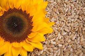 lule dielli