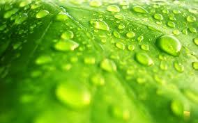 nature green 1
