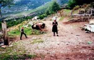 martesat shqiptare
