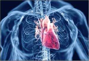 agjerimi sistemi kardiovoskular