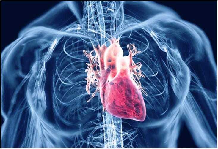 http://hrvatskifokus-2021.ga/wp-content/uploads/2016/10/mjeksiaislame.com_wp-content_uploads_2013_05_agjerimi-sistemi-kardiovoskular.jpg