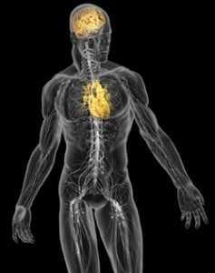 zemra dhe truri