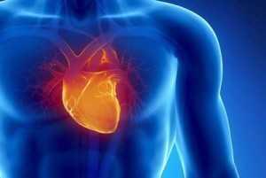 zemra anatomia