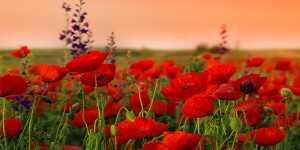 lulet xhamia