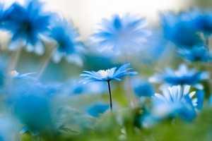 natyra lule