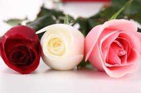 lule gruaja lule