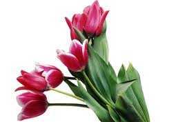 lule 8marsi