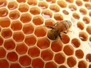 mjalti bleta