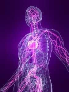 trupi i njeriut