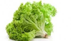 sallata e gjelber