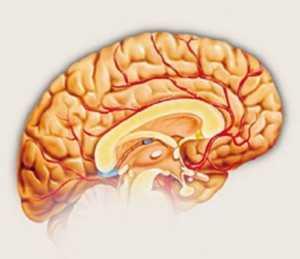 agjerimi dhe truri