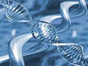 gjenetika