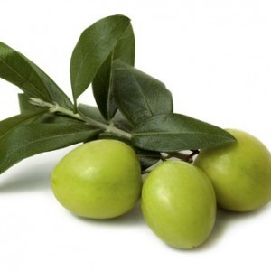 Gjethet e thara të ullirit (2)