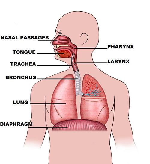 respiratorysystemcaptioned