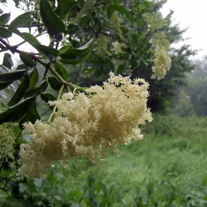 lule shtogu