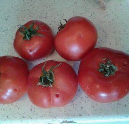 Çka mendoni për këto lloje të domatave ?