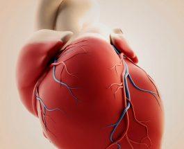Zemra dhe gjaku