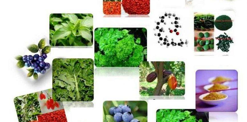 12 ushqime të shëndetshme dhe shëruese