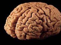 Projekte më të mëdha janë truri dhe shpirti!