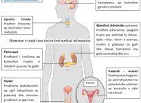 Hormonet