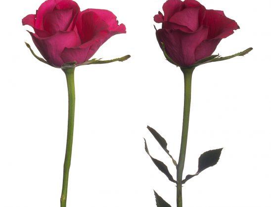 Të qenurit tipa të ndryshëm personaliteti, shkakton shumë probleme midis bashkëshortëve