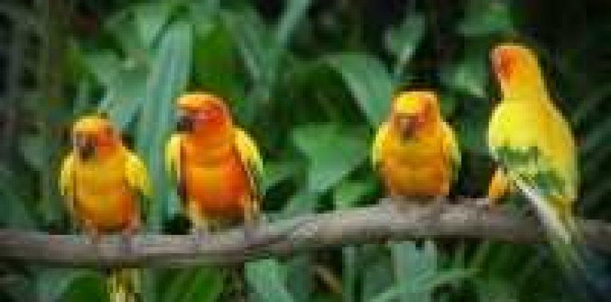 Katër zogjtë dhe Ibrahimi alejhis selam