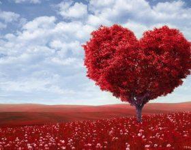 Pesë kura për sëmundjet e brendshme të zemrës! Si ta kurojmë zemrën nga mëkatet