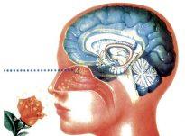 Trajtimi i problemeve fiziologjike, neurologjike dhe emocional nga aromat