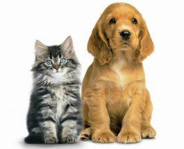 Islami i paraprin shkencës:Pastërtia e macës dhe papastërtia e qenit