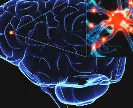 Çka është në fakt Dopamina