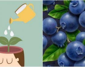 Fruti i cili i ndihmon nxënësit dhe studentët të mbajnë mendësh atë që mësojnë