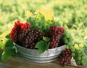 Rrushi ,terapi mjekësore e vecantë