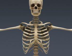 Skeleti është një mrekulli inxhinierike në vete