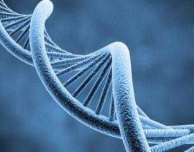 """Mrekullia e krijimit ne ADN"""