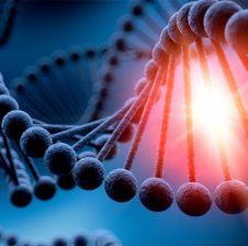Të gjitha informacionet për qenien e gjallë ruhen në molekulën e ADN-së