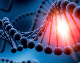 Mrekullia në trupin tonë! Roli i qelizave!