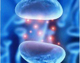 Agjërimi dhe neuroadaptimi