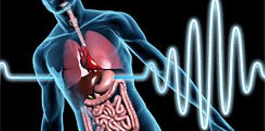 Agjërimi dhe ndikimi në mushkëri, veshka dhe pankreas