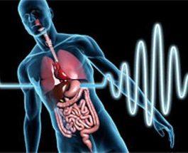 Ndikimi i agjërimit në proceset biokimike dhe bioritëm