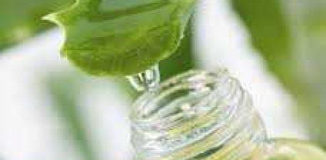 Aloe Vera bimë ideale për lëkurë