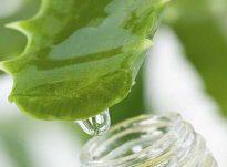 Sëmundjet që shëron lëngu i aloe vera