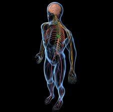 Sëmundjet e trupit