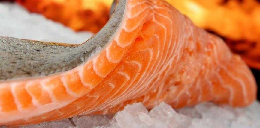 Mishi i kuq dhe peshku