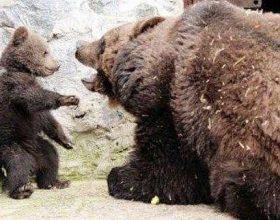 Nëna-arushë disiplinon fëmijën e saj