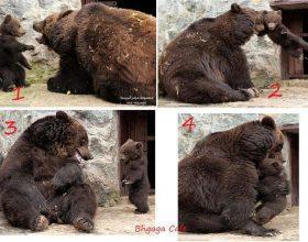 Nje Arush femer i bertet te voglit te saj ne kopshtin zoologjik – Interesante