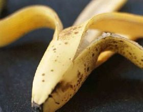 Pervec bananes edhe levoren e saj mund ta perdoreni per trajtim