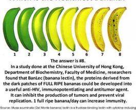 Cila eshte banania me e shendetshme?
