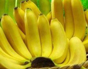 Nëse i pëlqeni bananet, lexoni këto 10 fakte suprizuese. Fakti numër 6 është shumë i rëndësishëm