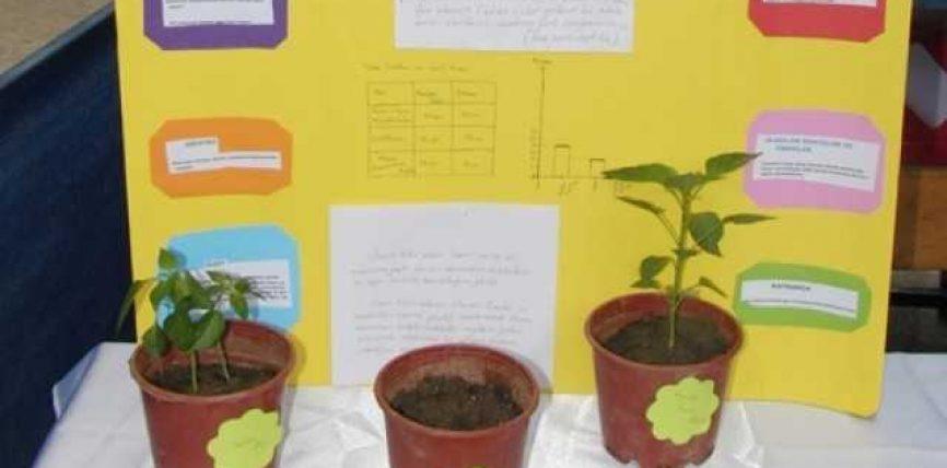 Kuriozitet: Vargjet e Kuranit ndihmojnë në rritjen e bimëve